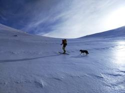 Le chien tient tient mieux que les skis !